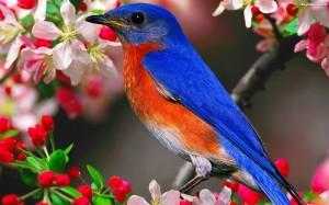 wiosna-niebiesko-pomaranczowy-ptaszek-kwiaty